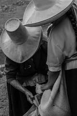 03 (Lechuza Fotografica) Tags: verde cajamarca peruvian farmers agricultores