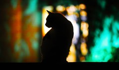 Cat at night (Michael Huette) Tags: cat night light shadow pet silhouette cats scene color reflection life