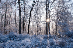 20180118 (Homemade) Tags: gaymarkpreserve nature woods winter snow northsalem preserve walk hike trail nikon2470mmf28 nikkor2470mmf28 westchestercounty newyork ny northsalemopenlandfoundation trees