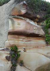 Sandstone Cliff (philipbouchard) Tags: cliff rock bluff sandstone face cookiemonster stripes repaired stabilized eyes australia sydney newsouthwales deewhy northernbeaches nsw coast