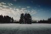 white firs    l  2018 (weddelbrooklyn) Tags: nature firs tree trees landscapes outside winter snow fourseasons nikon d5200 natur landschaft tanne tannen baum bäume draussen schnee vierjahreszeiten