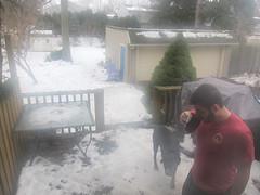 Nate and Bear (pr0digie) Tags: rochester christmas nate outdoor backyard fog foggy mist bear dog morning outside deck snow