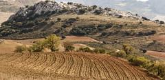 IMG_2968-1 Country Antequera (jaro-es) Tags: nature natura natur naturemaster naturewatcher naturesfinest landschaft landscape canon españa eos70d spanien spain spanelsko