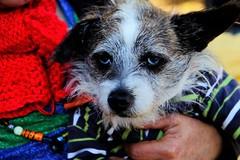Carita triste (ameliapardo) Tags: perros animales tristeza ojos amor sevilla andalucia españa fujixt1