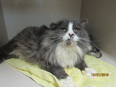 Ducky - 8 year old neutered male