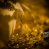 Light as a Feather (ursulamller900) Tags: extensiontube 12mm makroringe golden feather feder bokeh sparkle tessar2850