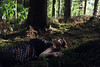 Like the Dawn (Ruby Hyde) Tags: red lipstick woods forest woodland fine art fineartphotography fineart conceptual surreal magic peace sleep relax sun light natural girl woman nature calm warm soft sunlight