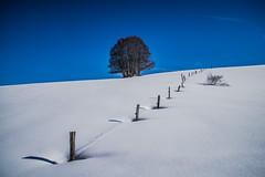 Equilibre (PaxaMik) Tags: plateauderetord retord snow frenchalps neige paysagedeneige arbre arbredhiver tree bleu blue horizon ain