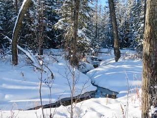 A brook in Fish Creek Provincial Park