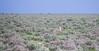 Namibia Etosha National Park (Sas & Rikske) Tags: canon eos1d x canoneos1dx canon100400 eric bruyninckx riksketervuren namibië namibia namib animal animals safari africa afrika etoshagamepark etosha game park etoshapan pan greatwhiteplace great white place oshindonga ndonga landscape green blauwevogelreizen 2017 springbok