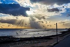 Canvey Island (dionysus_grape) Tags: sonya7ii voigtlandernokton50mmf15 manualfocus canveyisland