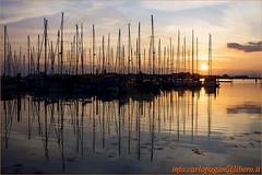 Alberi (Carlo Pagan_Photo) Tags: italia italy veneto chioggia cielo sky mare sea water acqua tramonto sunset sole sun allaperto outdoors riflesso reflections alberi tree