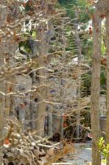 Backyard Branches (hecticskeptic) Tags: camarillo california autumn colors abstract winter 2018 markamorgan