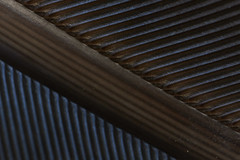 Bird feather abstract (pbertner) Tags: birdfeather abstract rainforest taironaka southamerica colombia