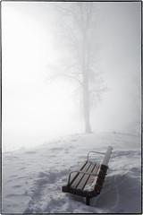 L1010070 (geelog) Tags: alberta bowriver calgary fishcreekprovincialpark hullswoods sikomelake ab canada leica q 28mmf17summilux winter icefog