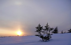 A Chilly Evening (Orion 2) Tags: snowshoeing bog wilderness dusk sunset evening snowshoes cold chilly newfoundlandandlabrador canada