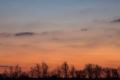 sundown (Marc McDermott) Tags: sunset sundown rural trees sky clouds high iso winter silhouette