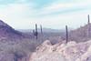 Saguaro NP (wrenee.com) Tags: 2017 35mm 800 film canonae1 cinestill800t december saguaro tucson arizona saguaronationalpark desert 800t cinestill pakonf135