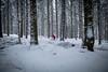 HM2A7555 (ax.stoll) Tags: feldberg frankfurt taunus mountain forest snow winter winterwonderland outdoor nature dog hovawart trees street wanderlust travel
