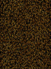 58741.01 Kolkwitzia amabilis (horticultural art) Tags: horticulturalart kolkwitziaamabilis kolkwitzia beautybush flowers driedflowers pattern seed