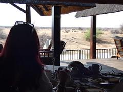 P1020354 (dieter.schultheiss) Tags: namibia naankuse lodge erindi game sossusvlei swakopmund safari cheetah lion gepard oryx dunes elephant elefant wild dog wildhund gnu zebra crocodile krokodil san bushmen buschmänner dead vlei solitaire