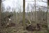 1801Terra003 (Stefan Heinrich Ehbrecht) Tags: sturm orkan storm wind