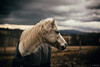 Stormy Pony (Jen MacNeill) Tags: pony horse weather rain stormy sky dramatic white