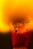 Light - Macro Monday Flame (anneleloirec) Tags: macromondays flame macro match light