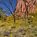 Greens and Yellows and a Backdrop of Blues and Reds (Capitol Reef National Park)