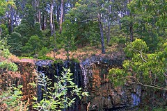 Textures of Australia! (maginoz1) Tags: australia colours textures fauna abstract art manipulate curves waterfall trentham victoria summer february 2018 canon g3x