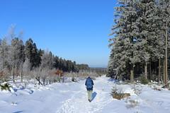 IMG_0235 (rudolf.brinkmoeller) Tags: eifel wandern natur eifelsteig hohesvenn