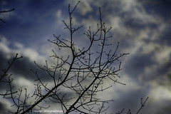 Stark Winter Day (Photographybyjw) Tags: stark winter day bare branches reaching for cloudy sky north carolina photographybyjw