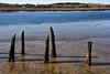 Low Tide (WilliamND4) Tags: tide water posts decay marsh nikon d810