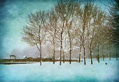 Snow and chilly days .. but beautiful :) (Julie Greg) Tags: snow nature park texture trees england kent water tree sky