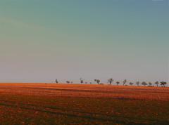 STOP ! (Le.Patou) Tags: france lorraine vosges vomécourt paysage landscape champ field nature verdure green vert blue bleu ocre orange ochre sunset evening soirée coucherdesoleil ontheroad