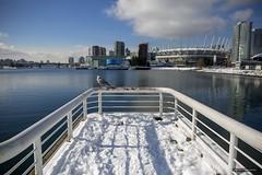 Snowbird (Clayton Perry Photoworks) Tags: vancouver bc canada winter sunshine explorebc explorecanada snow skyline bird seagull bcplace