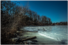 MARCH 2018 NGM_7421_4063-1-222 (Nick and Karen Munroe) Tags: wildlife water winter woods walk waterfront wintertrees winterstorm wintry winterwonderland wintery ice lake lakeshore lakefront frozen freezing frozenwater heartlakeconservationarea hike heartlake heartlakeconservation canada clouds colour color colors colours conservation beauty brampton beautiful brilliant blue nikon nickmunroe nickandkarenmunroe nature nikon2470f28 nickandkaren nick 2470f28 2470 d750 nikond750 munroedesignsphotography munroedesigns munroephotography munroe karenick23 karenick karenandnickmunroe karenmunroe karenandnick karen landscape ontario outdoors ontariocanada geese canadageese goose birds bird waterfowl animal animals