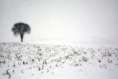 Wintry Dream (emerge13) Tags: countryside snow winter white blanc neige rural fields trees arbres nature nieve champs country wintertextures lépiphaniequébec simplistic minimal enchantingevocative