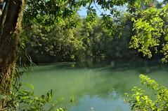 Natural Forest Pool, Rio Lacanja - Chiapas, SE Mexico (elhawk) Tags: mexico chiapas lacanjachansayab riolacanja lacandonforest