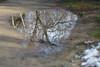 Reflejos (Valentín Sánchez Tiemblo) Tags: nikon d5300 8518g winter invierno reflejos paseo naturaleza