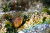 20180120-DSC_8189.jpg (d3_plus) Tags: jogashimaisland 185mm 三浦 水中 三浦半島 fish marinesports apnea closeuplens 風景 息こらえ潜水 zoomlense ucl165m67 ウォータープルーフケース 185mmf18 sky underwater nikon1 景色 miurapeninsula 魚 クローズアップレンズ watersports wpn3 nikon sea inonucl165m67 japan miura ニコン 50mmf18 50mm ニコン1 nikonwpn3 inon 素潜り 神奈川 1nikkor185mmf18 nikkor 城ヶ島 スキンダイビング nikon1j4 マクロ drive 海 snorkeling ワイコン diving skindiving scenery イノン ズーム マリンスポーツ j4 port 空 日本 kanagawa waterproofcase シュノーケリング