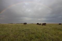 (Rodo Rigante) Tags: africa tanzania safari elephant rainbow serengeti