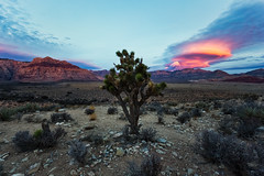 Red Rack Canyon (Glenn Guinita) Tags: lasvegas sunrise landscapephotography desert mohavedesert joshuatree clouds sky canon 6d teamcanon nature photography