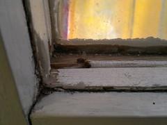 2018-02-02-13031 (vale 83) Tags: bee stuck between windows nokia n8 coloursplosion colourartaward friends