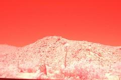 Joshua Tree National Monument California Infrared (62) (Beadmanhere) Tags: california joshua tree national monument infrared
