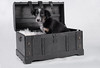 in a box (Flemming Andersen) Tags: animal frisbee puppy bordercollie box dog hund pet sheepdog treasure jelling regionofsoutherndenmark denmark dk