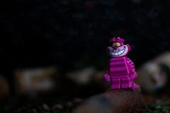 Nunca pierdas la sonrisa (Marmotuca) Tags: aliciaenelpaísdelasmaravillas bosque colores gato lego rayas