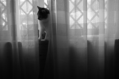 shadows (pepe amestoy) Tags: blackandwhite indoor cats elcampello spain fujifilm xe1 voigtländer color skopar 421 vm m mount