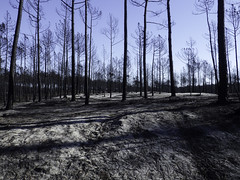 Burnt forest (Martin Lopatka) Tags: portugal holiday vacation landscape forest burnt trees forestfire nature