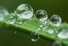 Regentropfen 1 (dr.klaustrumm) Tags: grashalm regentropfen natur licht nahlinse raynox